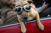 Sicher mit Hundeführerschein